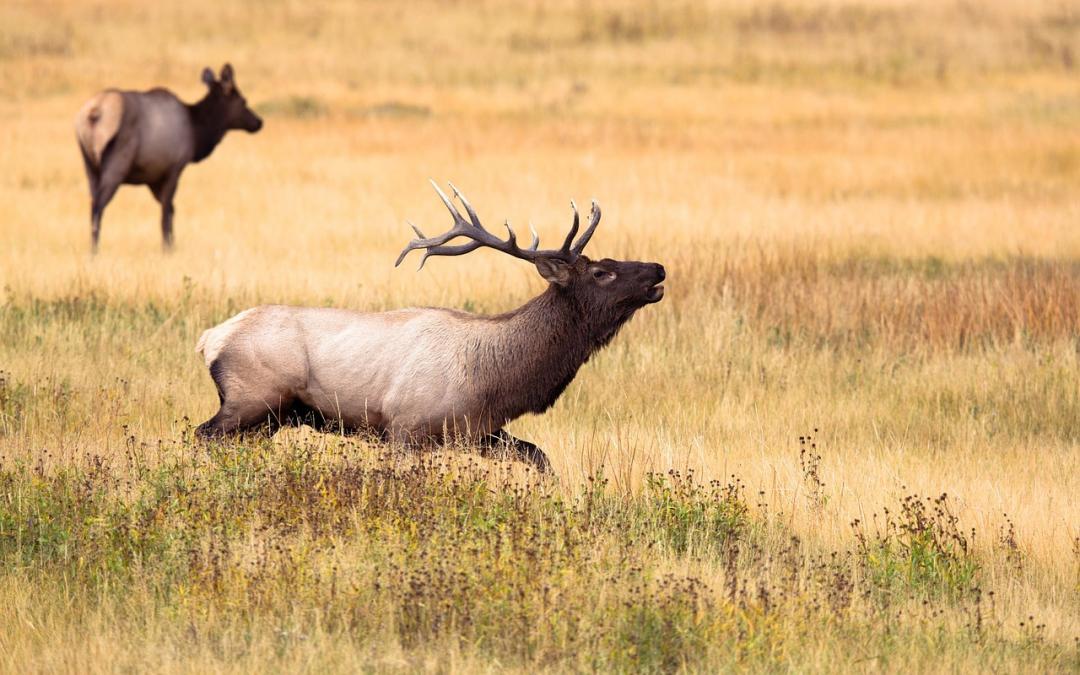 Bogenjagd: Pro und Contra zur Jagd mit Pfeil und Bogen
